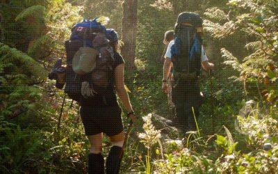 Bush Walking