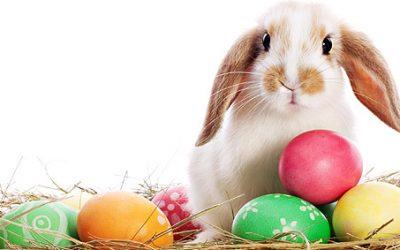 Easter Bonanza